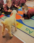 A kid goat visiting the classroom
