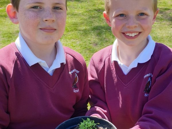 Junior pupils with seedlings to sell